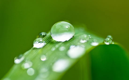 25 Fresh Photographs of Dew Drops Wallpapers
